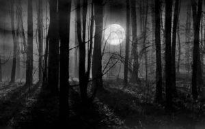 hermitage-woods